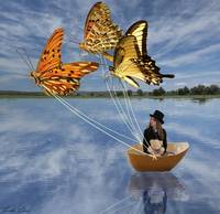Butterfly Sailing