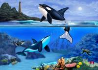 C:\fakepath\THE ORCA FAMILY