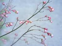 Pink Flower Branches-2