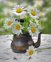 Teapot with Daisies