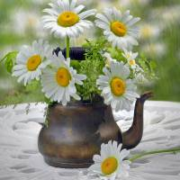"""Teapot with Daisies"" by Nina Bradica"