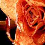 """""""Wrinkled and Withered"""" by KerriAnnCrau"""