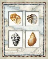 Nautical Shell Collection I