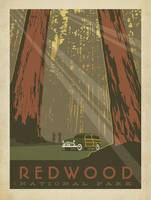 Redwood National Park, California - Retro Travel P