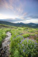 Crested Butte Stream