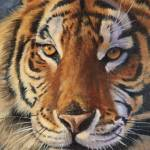 """Siberian Tiger"" by artlicensing"