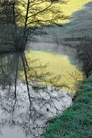 Reflections of Fishpond Bank (39894-RDA)