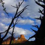 """Sedona Shadow Tree"" by laurielarson"