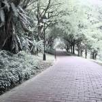 """Digital Infra-red, Fort Canning Park Singapore"" by sghomedeco"