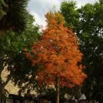 """Barcelona-colorful tree"" by artbyshesh"