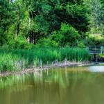 """Fleming Creek"" by patsphotos"