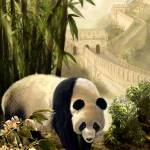 """Panda Bear and the Great Wall of China"" by Unique_designs"