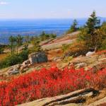 """Red Heath on Sargent Mountain, Acadia National Par"" by RoupenBaker"