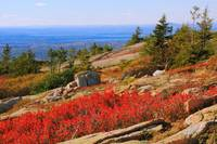 Red Heath on Sargent Mountain, Acadia National Par