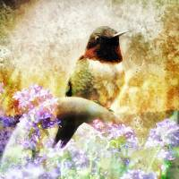 Garden Perch Art Prints & Posters by Lisa Rich
