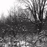 """Imagekind"" by rickytraughber"