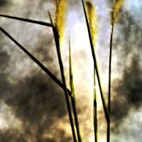 WEEDS AND CLOUDS, v 2, Edit G Art Prints & Posters by Nawfal Johnson Nur