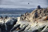 Life In the Beagle Channel