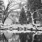 """Reflected Winter Scenery in Yosemite, California"" by JuliaHiebaum"