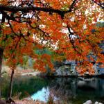 """Lost Maples Pond"" by MichaelTidwellPhotography"