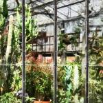 """Greenhouse With Large Cactus"" by susansartgallery"