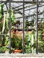Greenhouse With Large Cactus