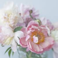 Peony bouquet Art Prints & Posters by Judy Stalus