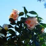 """""""sunlight flowers"""" by annaeisenberg"""