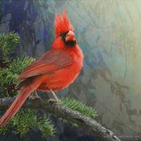 mountain cardinal Art Prints & Posters by r christopher vest