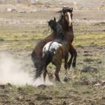 """""""Wild Horses"""" by csjones"""