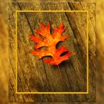 """Pin Oak leaf in Autumn"" by AppleCoreStudio"