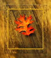 Colorful Autumn Pin Oak leaf
