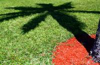 Palm Tree Shadow on Grass
