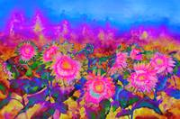 Sunflower Fields - pink