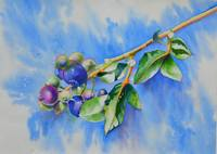 Blueberry Sprig