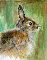 Young Hare in Watercolour