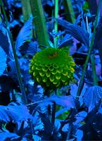 green and purple flower ball