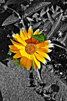 Grunge yellow flower