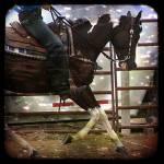 """Western Pinto"" by angelandspot"