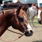"""Horse Show Scene"" by angelandspot"