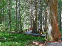 Trail Of The Cedars - Glacier National Park