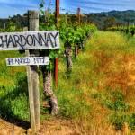"""Chardonay"" by snapshotsmity"