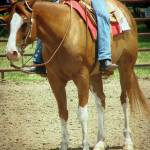 """Western Horse"" by angelandspot"