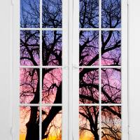 Old 16 Pane White Window Colorful Sunset Tree View Art Prints & Posters by James