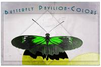 Butterfly Pavilion - Colors - Green