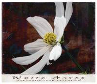 White Aster Study IV - Titled
