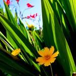 """Correopsis Study 1"" by robertmeyerslussier"