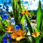 """Correopsis Study 2"" by robertmeyerslussier"