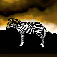 Zebra In The Mist Art Prints & Posters by Emily Colosimo
