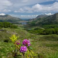 Ladies View , Co. Kerry Art Prints & Posters by Martina Fagan